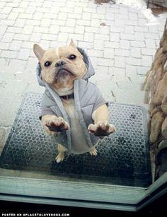 French Bulldogs Rule — aplacetolovedogs: I iz finished playing and I iz...