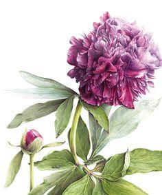 modern botanical artist | Elaine Searle