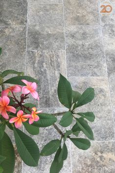 Bring an element of luxury to your outdoor areas with our wide colour and style range of Travertine tiles. Modern Backyard Design, Terrace Design, Patio Design, Garden Design, Natural Stone Pavers, Natural Stones, Travertine Tile, Stone Tiles, Pool Coping