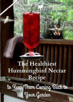 Healthiest Hummingbird Nectar Recipe Keep the hummingbirds coming back year after year with this healthy hummingbird nectar recipe.Keep the hummingbirds coming back year after year with this healthy hummingbird nectar recipe. How To Attract Hummingbirds, How To Attract Birds, Sugar Water For Hummingbirds, Hummingbird Feeder Recipe, Recipe For Hummingbird Nectar, Homemade Hummingbird Food, Hummingbird Plants, Hummingbird Migration, Hummingbird House