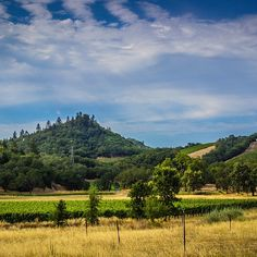 .@napavalaree (Valaree) 's Instagram photos | Such a #Beautiful place #napavalley #clouds #vineyard #view #summer #instadaily #instagood #webstapic #photooftheday #pointy #mountain #lifeisgood