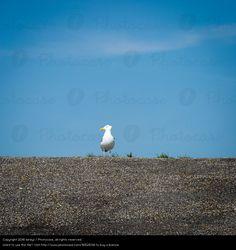 Foto 'wo seid ihr ?' von 'birdys'