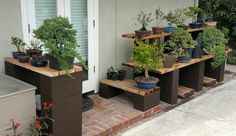 Picture #7 - It's hard to believe (actually not really) I've run out of room on my bonsai display bench.  I added a display bench to the left for my smaller pre-bonsai. 5/8/16
