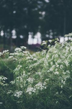 These wild flowers remind me of going to grandma's summer cottage. Flower Images, Flower Pictures, Mother Earth, Mother Nature, Spring Nature, Summer Dream, Spring Blooms, Green Plants, Country Life