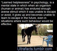 Learned helplessness is behavior typical of a human or non-human animal that has endured repeated painful or otherwise aversive stimuli which it was unable to escape or avoid. After such experience, the organism often fails to learn escape or avoidance in new situations where such behavior would be effective. In other words, the organism learned that it is helpless in aversive situations, that it has lost control, and so it gives up trying. is the view that clinical depression and related mental Health Psychology, Psychology Quotes, Therapy Tools, Therapy Ideas, Leadership Courses, Learned Helplessness, Control Quotes, Reality Check, Social Work