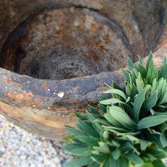 euphorbia Succulents, Plants, Gardens, Garden Landscaping, Atelier, Succulent Plants, Plant, Planting, Planets