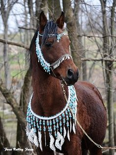 super pretty Arabian costumehttps://vine.co/v/hnMKbhPQ2Y1. Could do a quadsuit arab horse costume and use this around the neck to cover the seeing screen.