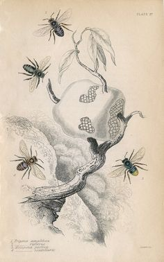 Antique Bee Print - Image Download - The Graphics Fairy