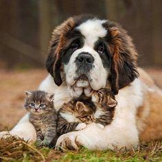 sub #puppylove #puppy #puppygram #puppyoftheday #puppylife #puppydog #puppypalace #puppyeyes #puppys #puppyface #puppies #puppiesofinstagram #puppiesforall #puppiesofig #puppie #puppiesxdogs #puppiesforsale #frenchbulldog #frenchie #dog #dogsofinstagram #dogs #dogstagram #dogoftheday #doggy #doglife #doglove #dogofinstagram #dogsofinstaworld #loucosporarmas Copy #loucaporarmas #taurus #pt740 #40 #pc #top #brasil #pistola #policiabrasileira #inshot #girls #cute #summer #blur #sun #happy #fun…