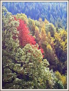 le cose di Mirtilla My autumn