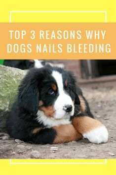 http://alldogsmatter.co/dogs-nails-bleeding/