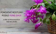 Feng Shui | AstroPlus.cz Feng Shui, Korn, Plants, Reiki, Terrarium, Gardening, China, Japan, Life