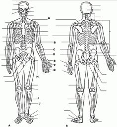 anatomy and physiology coloring pages free Download