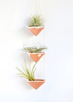 Let's make a living room decoration using air plants to decorate your living room. This air plant display idea will help you decorate your home using this unique plant. These indoor plants ne… Hanging Air Plants, Hanging Plant Wall, Diy Hanging Planter, Diy Planters, Indoor Plants, Planter Ideas, Indoor Garden, Balcony Garden, Hanging Succulents