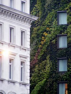 The vertical garden's at the Athenaeum Hotel in London, created by Patrick Blanc. Old Building, Green Building, White Building, Green Architecture, Landscape Architecture, Workshop Architecture, Beautiful Architecture, Exterior Design, Interior And Exterior