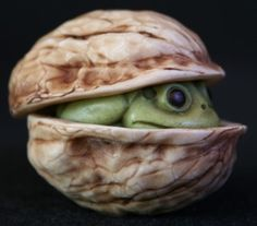 AB In a Nutshell- 2010 Release Frog in Walnut
