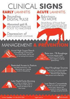 Fact Sheet - Laminitis -in horses causes clinical signs management