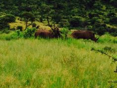 Rhinos Rhinos, South Africa, Country Roads, Mountains, Nature, Travel, Naturaleza, Viajes, Trips
