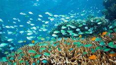 Plongée à Menjangan - Pour une sortie avec simple masque et tuba ou bien lors d'une plongée bouteilles, l'île inhabitée et protégée de Pulan Menjangan est réputée pour ses tombants, des murs qui descendent entre 20 à 60 mètres de profondeurs et abritent de magnifiques fonds marins.