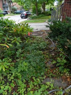 Toronto garden staging/fall garden cleanup in Mount Pleasant West/Davisville Organic Farming, Organic Gardening, Paul Jung, Toronto Gardens, Toronto Houses, Gardening Services, Deal With Anxiety, Mount Pleasant, Before And After Pictures