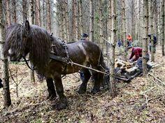 Orion Bättre än en traktor? Den här nordsvenska hästen visades upp i Götene i helgen