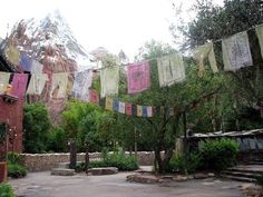 Animal Kingdom - Everest