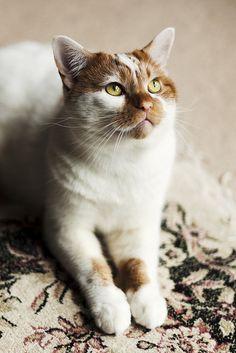 Angie | #cat #chat #katze #gato