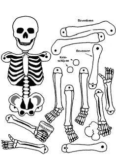 skelet trekpop maken - Google zoeken