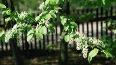 Lehtipuiden nimet ovat vanhaa perua Plants, Plant, Planets