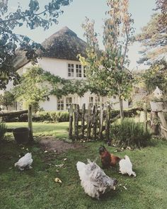 Idyllic country home with picket fence and chickens, simple life – Landhaus ideen - Garten 2019 Garden Cottage, Home And Garden, Farm Cottage, French Cottage, Cottage Style, Farm House, Garden Farm, Farm Fence, Farm Gardens