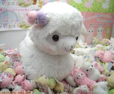 Fluffy big... alpaca?! or llama?! or is that a sheep??