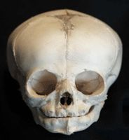 human fetus skull- so sad. Well, here it is for anyone who doesn't believe a fetus is a real person!
