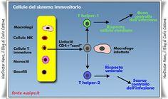 Stress a breve termine rinforza sistema immunitario