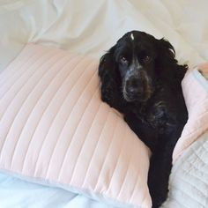 Experience true luxury with DUSK's bedroom essentials; from 400 thread count bed linen and pillowcases to sumptuously soft throws and duvets. Luxury Bedding, Old World, Dusk, Pillow Cases, Cheer, Classy, Cold, Warm, Nice