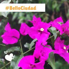 #BelloCiudad Bellisima, Plants, Cities, Plant, Planets