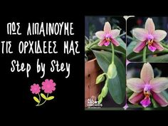 Orchids, Youtube, Flowers, Plants, Flora, Royal Icing Flowers, Youtubers, Floral, Plant
