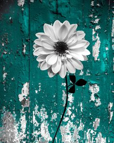 *Color (Teal) * Printed On Professional Archival Photo Paper * Picture Size 8 x 10 Inches and Matted into a 11 x 14 Inch Double White Mat