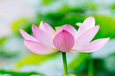 Ancient lotus of cloudy days by BuchioTakano. @go4fotos