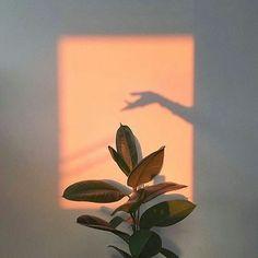 Plants aesthetic light 34 Trendy ideas – Photography – … – Best Home Plants Aesthetic Light, Orange Aesthetic, Aesthetic Vintage, Aesthetic Beauty, Aesthetic Plants, Fotografia Retro, Jolie Photo, Design Set, Photo Instagram