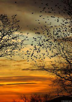 beauty of nature sky birds trees