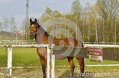 Photography of closeup brown horse