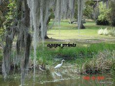 The swamps of Houma, Louisiana