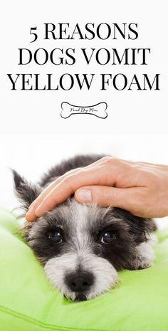 Training Your Dog, Training Tips, Perro Shih Tzu, Pekinese, Sick Dog, Dog Facts, Dog Safety, Puppy Care, Pet Care