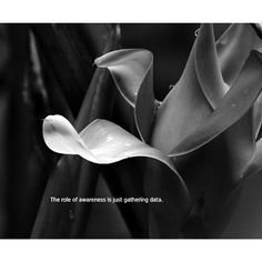 The role of awareness is just gathering data. —Sayadaw U Tejaniya (photo by Hor Tuck Loon) Mindfulness, Consciousness