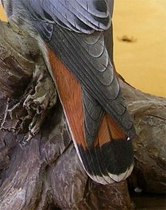 American Kestrel carved by Bob Guge