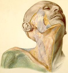 The lost art of medical illustration. Beautiful.