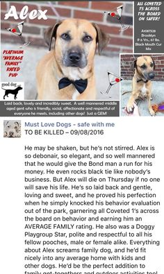 SAFE❤️❤️ 9/9/16 Brooklyn Center ALEX – A1087528 MALE, TAN / WHITE, BLACK MOUTH CUR MIX, 6 yrs STRAY – STRAY WAIT, NO HOLD Reason STRAY Intake condition UNSPECIFIE Intake Date 08/27/2016 http://nycdogs.urgentpodr.org/alex-a1087528/