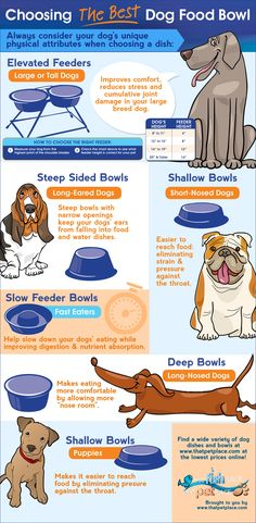Choosing the perfect dog bowl (infographic) #dog #bowls Oscar has long ears so he has a special bowl... He has never had an ear infection which is typical with long eared dogs.