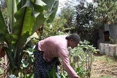 An Ethiopian woman growing maize with the help of the World Food Programme. World Food Programme, Ethiopia, Women Empowerment, The Help, Around The Worlds, United Nations, Woman, Style, Swag