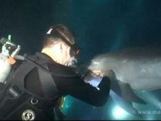 Insolite. Les surprenantes images d'un dauphin sollicitant l'aide d'un plongeur - Monde - Le Télégramme